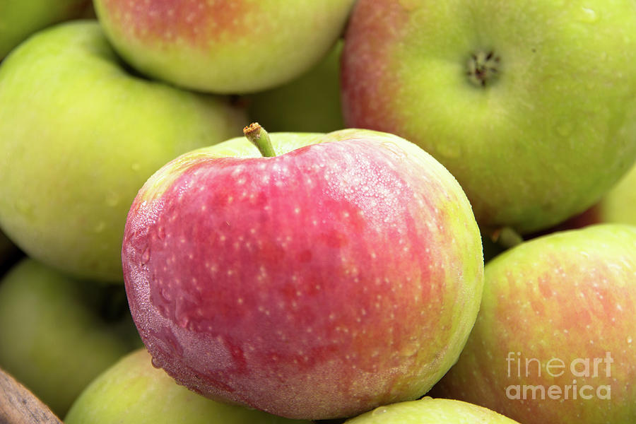 Juicy apples by Agnes Caruso