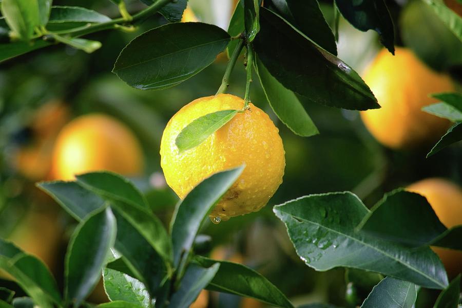 Juicy Fruit Photograph