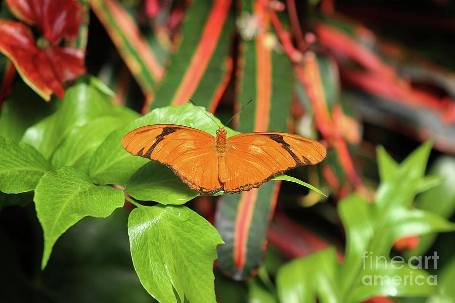 Julia Butterfly 2019 by Karen Adams