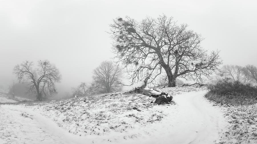 Julian - Five Oaks Trail by Alexander Kunz