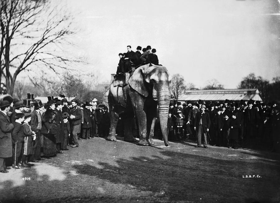 Jumbo At London Zoo Photograph by London Stereoscopic Company