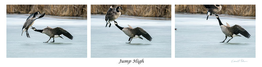 Jump High by Edward Peterson