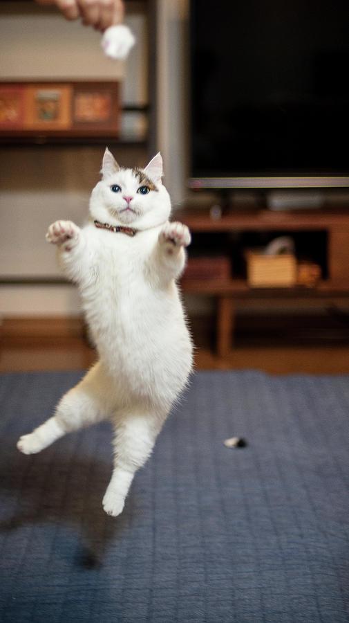 Jumping Cats Photograph by Nazra Zahri