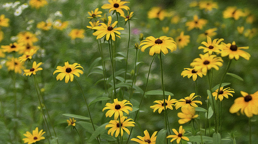 June's Black-Eyed Susans by SL Ernst