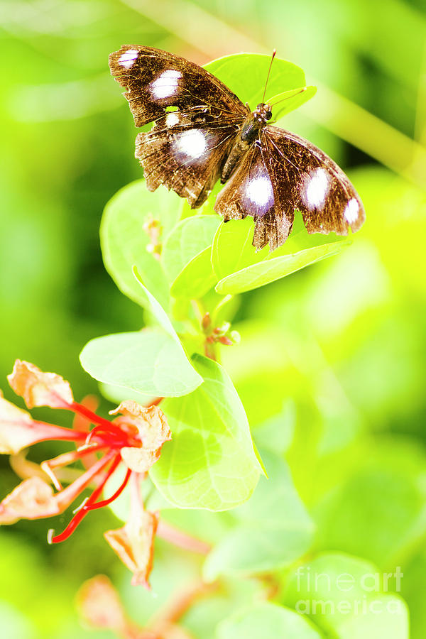 Animal Photograph - Jungle Bug by Jorgo Photography - Wall Art Gallery