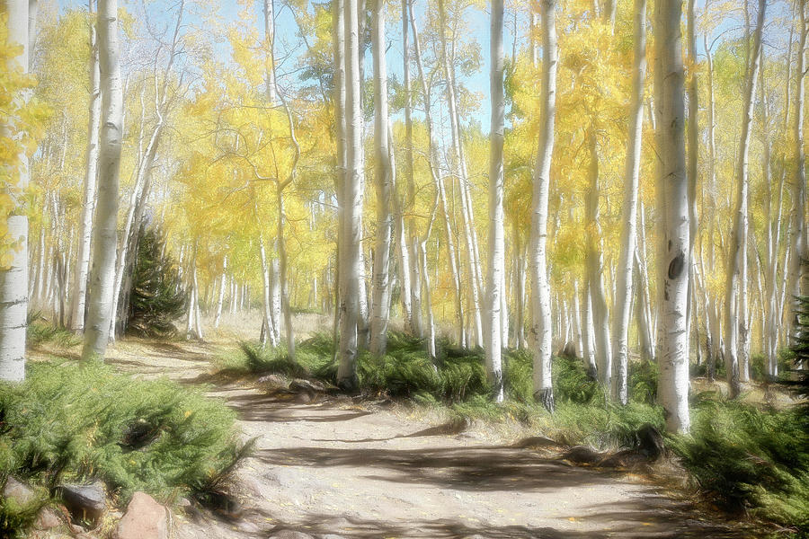 Pando Photograph - Just A Closer Walk With Thee by Donna Kennedy