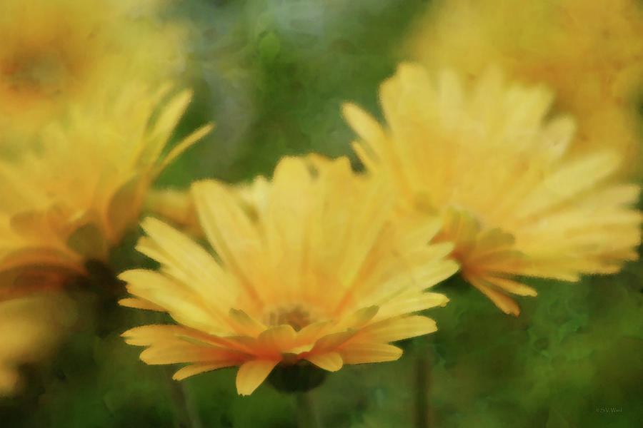 Just a Glimpse of Yellow 6379 IDP_2 by Steven Ward