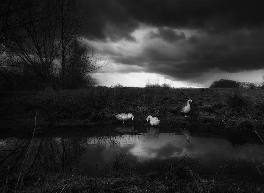 Mood Photograph - Just A Rainy Day by Saskia Dingemans