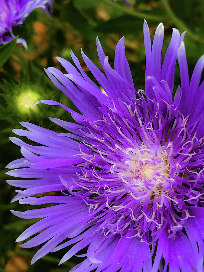 Flowers Photograph - Just A Stroll by Joseph Yarbrough