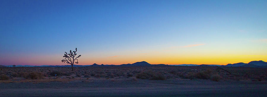 just after Sunset one sees a small plant and some hills in the d by Kim Vermaat
