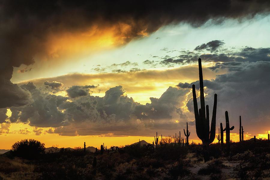 Saguaro Sunset Photograph - Just Another Summer Sunset In The Sonoran by Saija Lehtonen