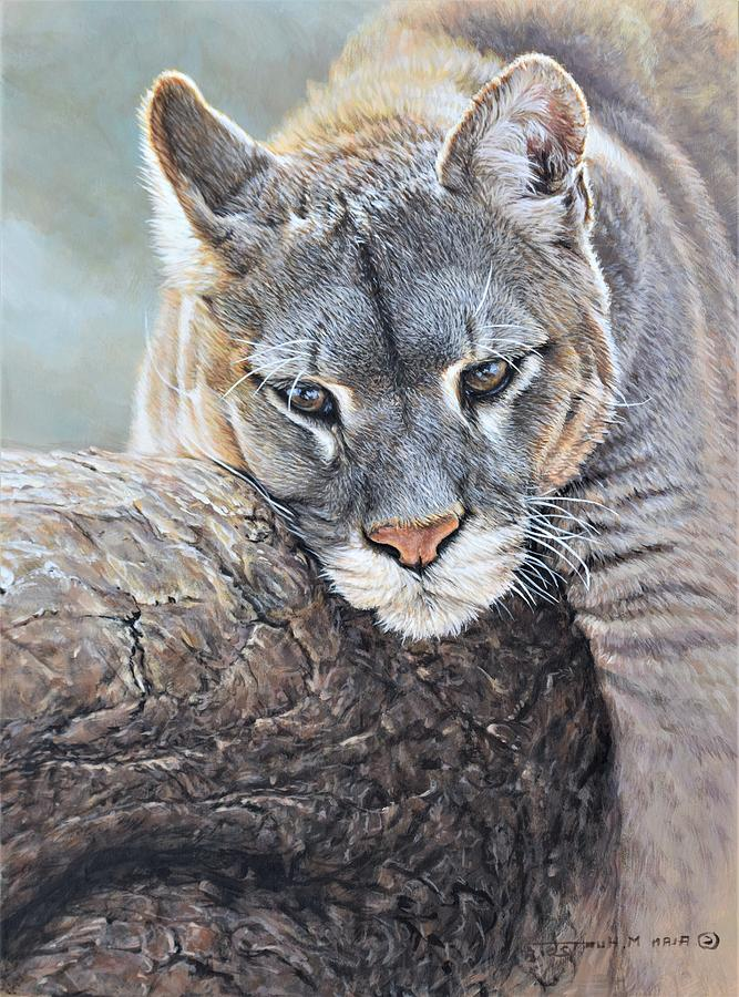 Cougar Painting - Just Chillin - Cougar By Alan M Hunt by Alan M Hunt