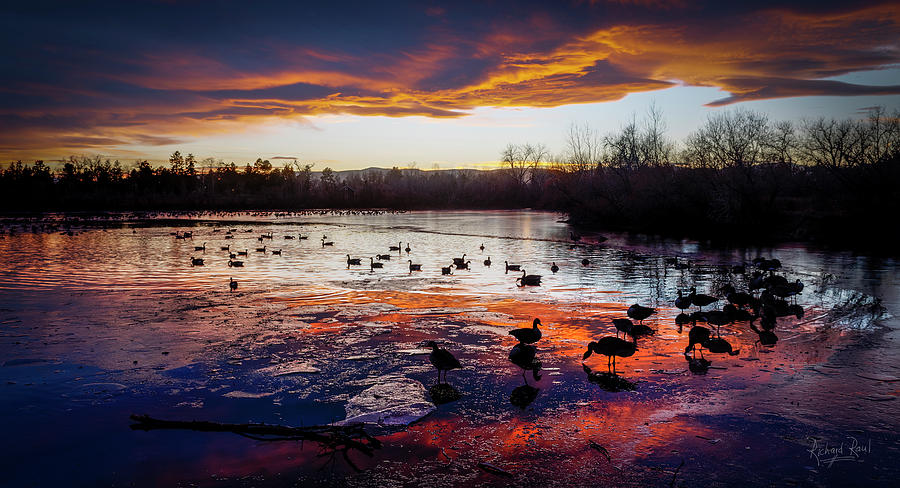 Geese on Fire by Richard Raul Photography
