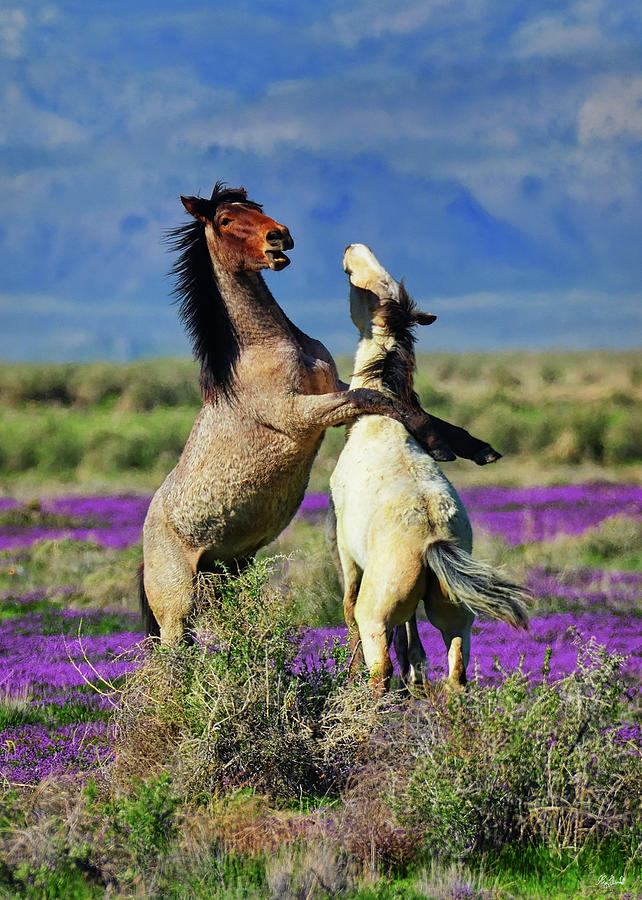 Just Horsing Around by Greg Norrell
