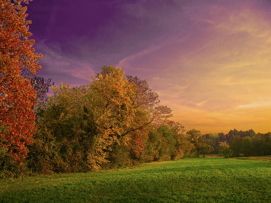 Just  Other Fall Photograph by Dima Lauzzana