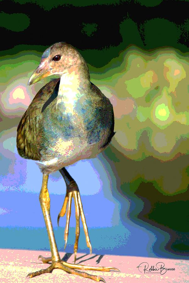 Juvenile Purple Gallinule Bird by Philip Bracco
