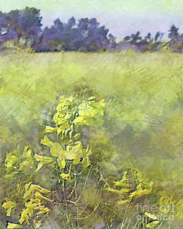 Kale Fields by CR Leyland