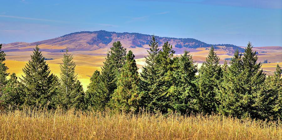Kamiak Butte from Phillips Park by David Patterson