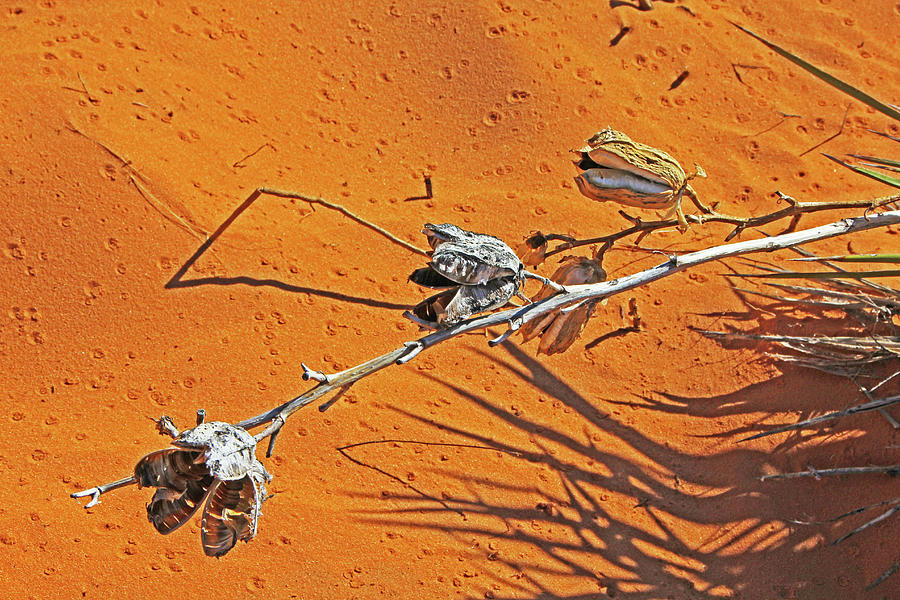 Kanab Coral Dunes dried desert weed sand shadows grays browns 6774 Photograph by David Frederick