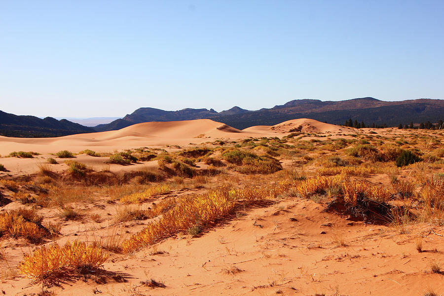Kanab coral Dunes grasses scrub mountain ridge 6780 by David Frederick