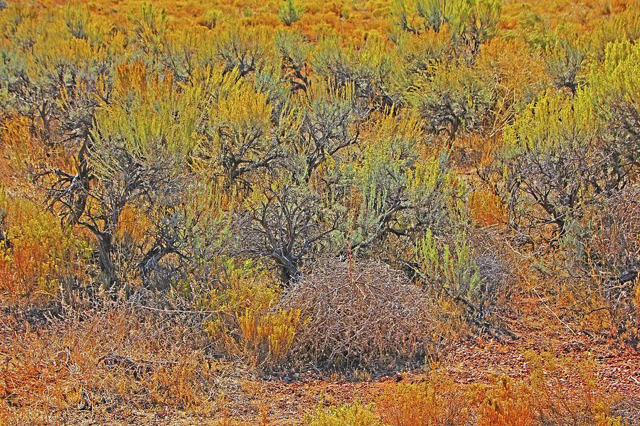 Kanab desert autumn scrub yellows oranges browns blacks by David Frederick