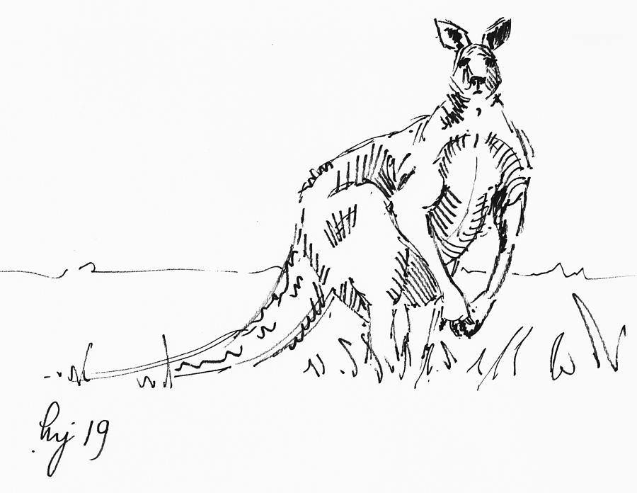 Kangaroo drawing by Mike Jory