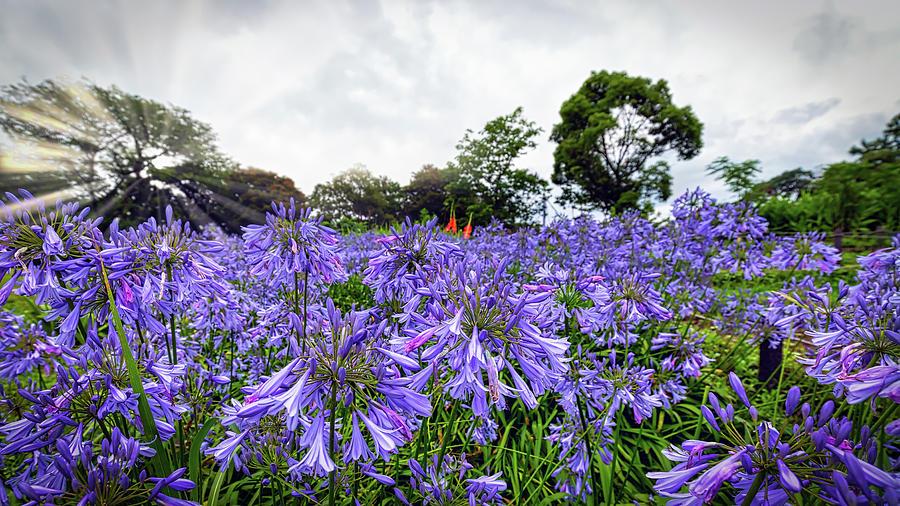 Kannonzaki Garden 2 by William Chizek
