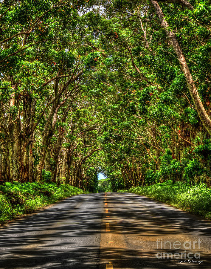 Kauai South Shore Tree Tunnel Eucalyptus Tree Landscape Art  by Reid Callaway