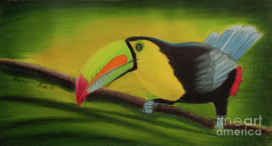 Keel Billed Toucan by Dorothy Lee