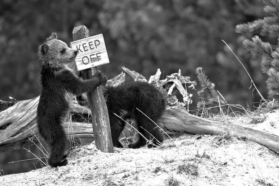 Keep Off The Thermal Features Black And White by Adam Jewell