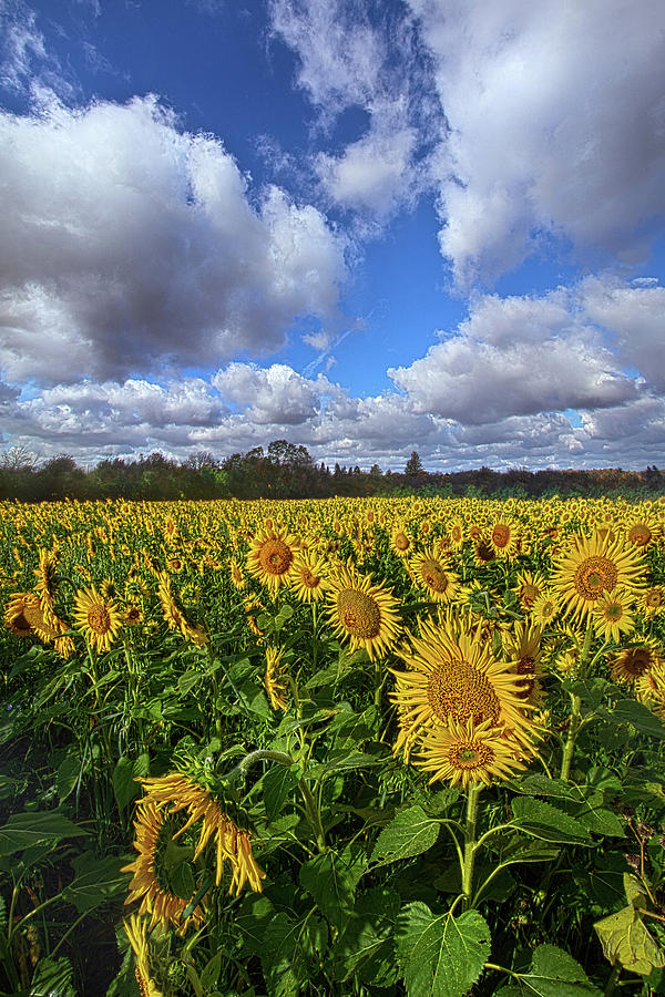 Life Photograph - Keep Your Face To The Sunshine by Phil Koch