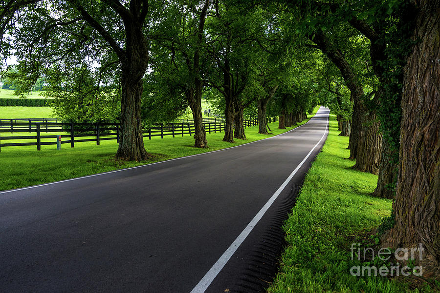 Kentucky Bluegrass Horse Country - Old Frankfort Pike by Gary Whitton
