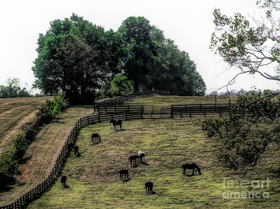 Kentucky Horses by Randy J Heath