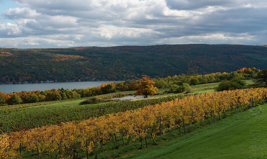Keuka Autumn Dreams by Joshua House