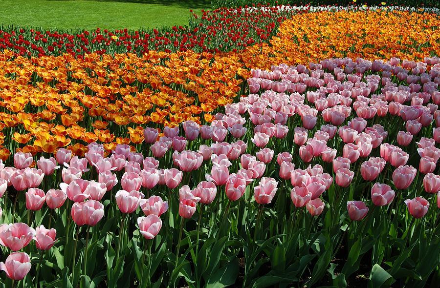 Keukenhof Gardens Photograph by Dragos Cosmin Photos