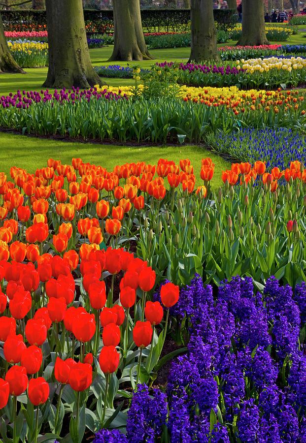 Keukenhof Gardens In Holland Photograph by Darrell Gulin