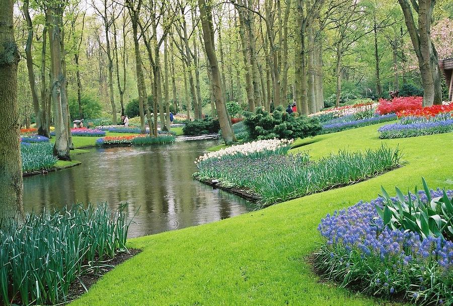 Keukenhof Gardens by Susie Rieple