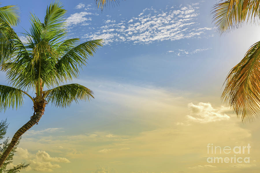 Key Largo Florida Sunset by Olga Hamilton