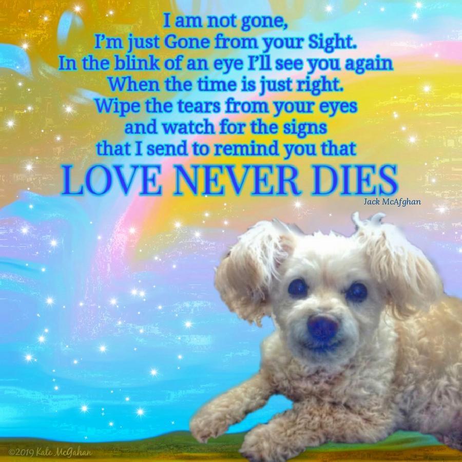 Tia Love Never Dies Digital Art by Kate McGahan