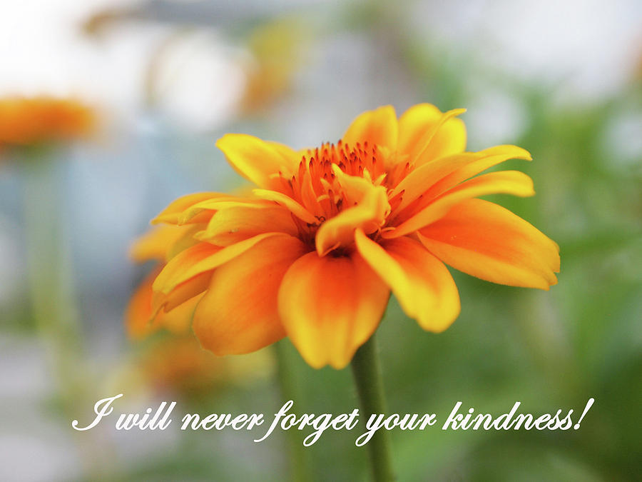 Kindness by Jacqueline Sleter