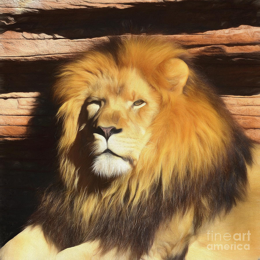 King by Kathy Baccari