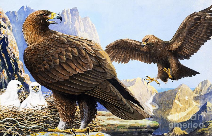 King Of Birds by Rb Davis
