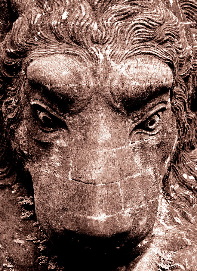 King of the Monkey Forest by Melanie Maslaniec