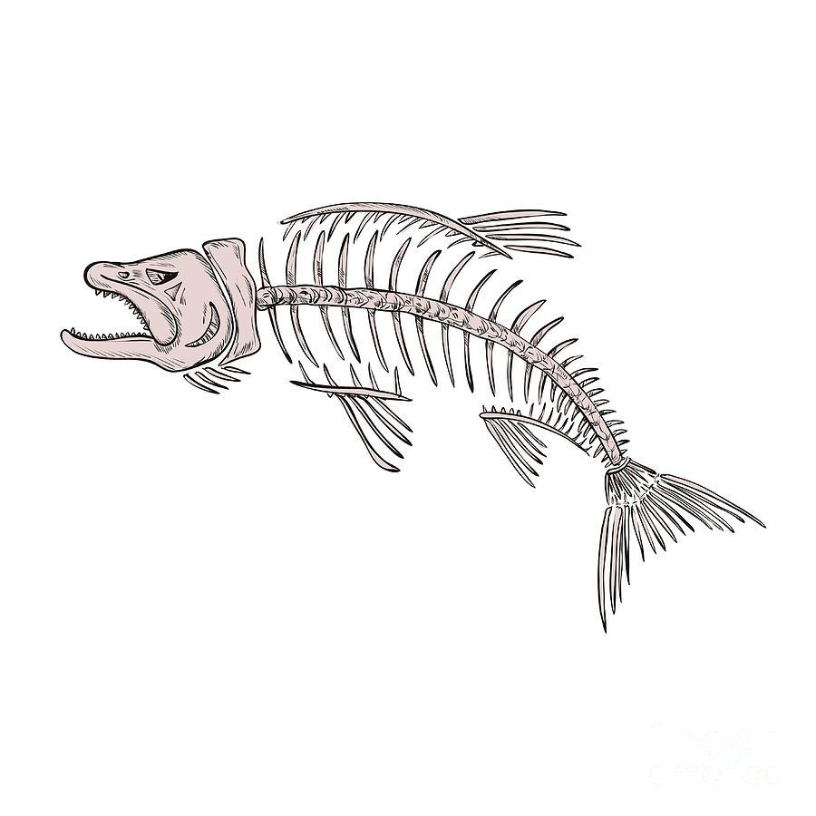 Drawing Digital Art - King Salmon Skeleton Drawing by Aloysius Patrimonio