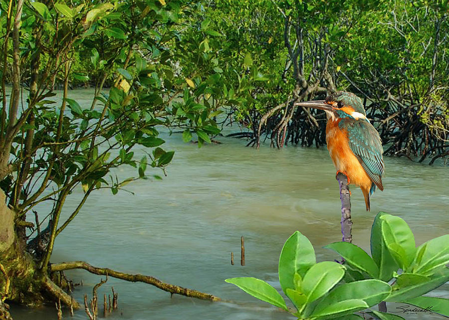 Bird Digital Art - Kingfisher In The Mangroves by M Spadecaller