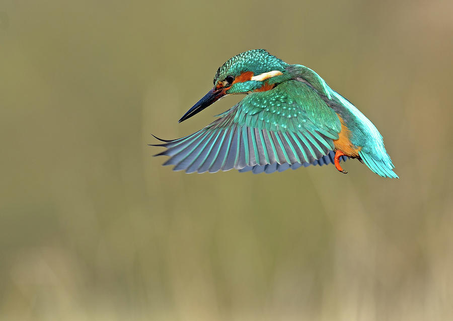 Kingfisher Photograph by Mark Hughes
