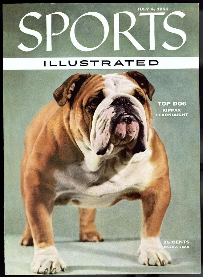 Kippax Fearnought, 1955 Westminster Kennel Club Dog Show Sports Illustrated Cover Photograph by Sports Illustrated