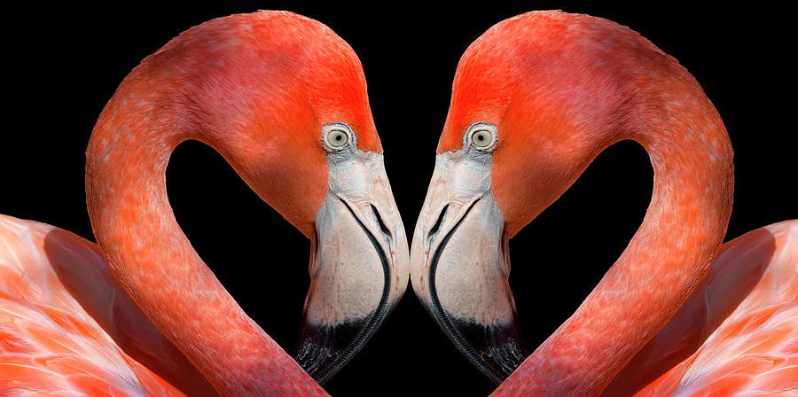Kissing Flamingos Photograph by Dean Fikar