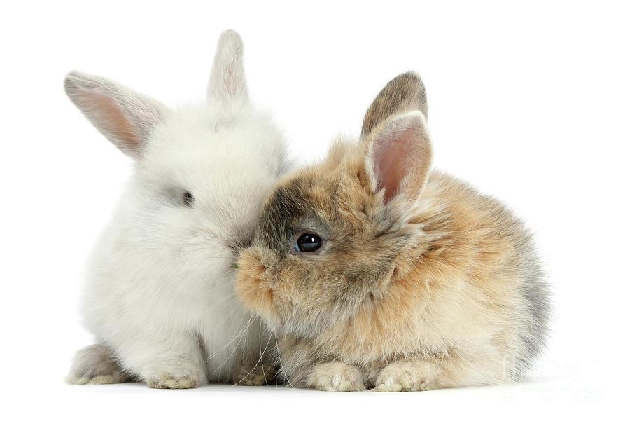 Kissing Love Bunnies by Warren Photographic