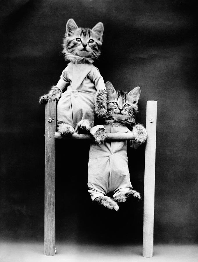 Kitten Acrobats On Pull Up Bar - Harry Whittier Frees by War Is Hell Store
